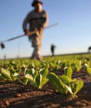 agricoltura del sud