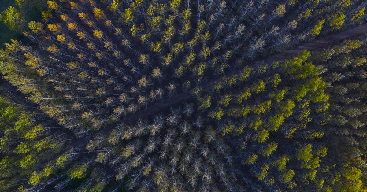 veduta dall'alto di foresta