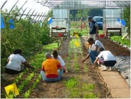 immagine agricoltura sociale