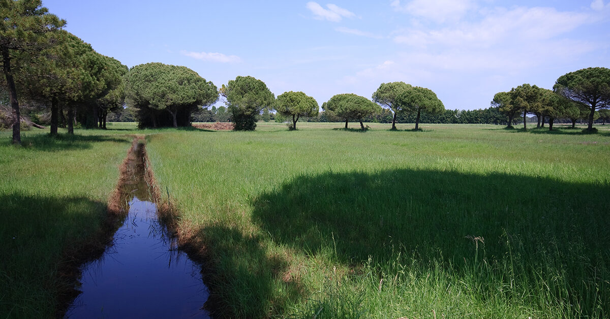 Parco del delta del Tagliamento