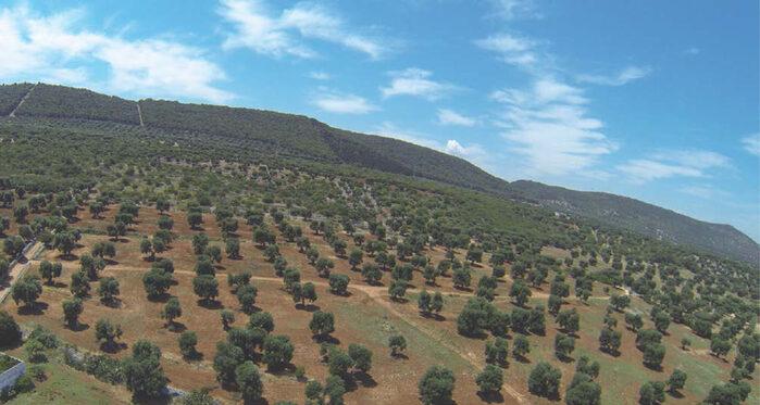 'Parco delle Dune Costiere' <info@parcodunecostiere.org>, Ostuni - Puglia